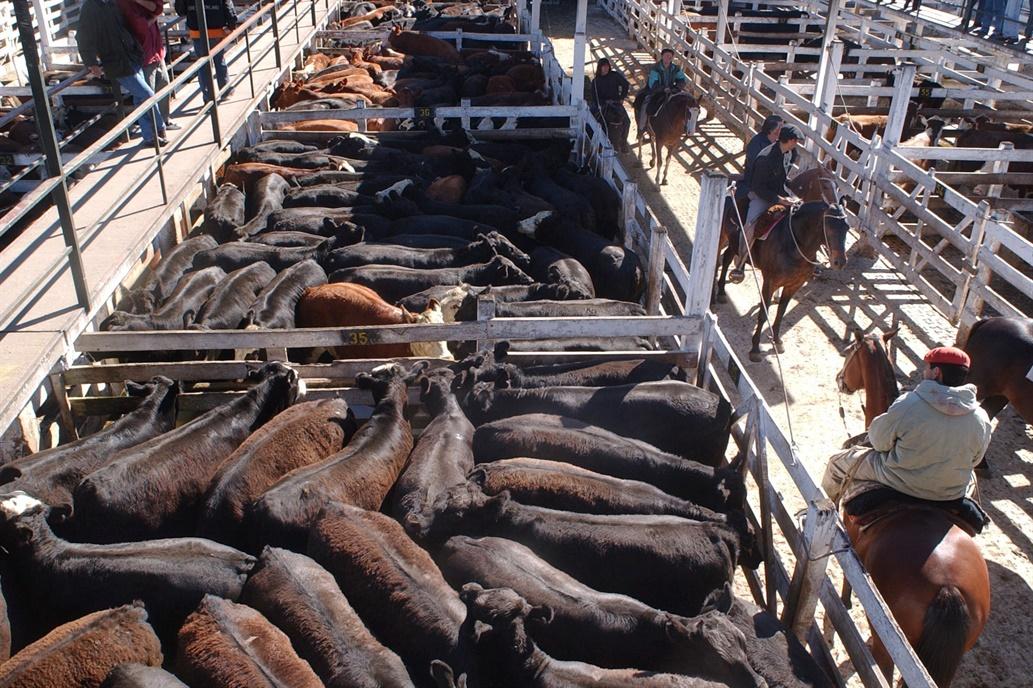 La hacienda se negoció con mayoría de alzas en el Mercado de Liniers